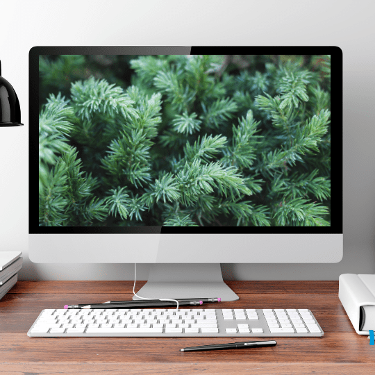 evergreen content on computer screen